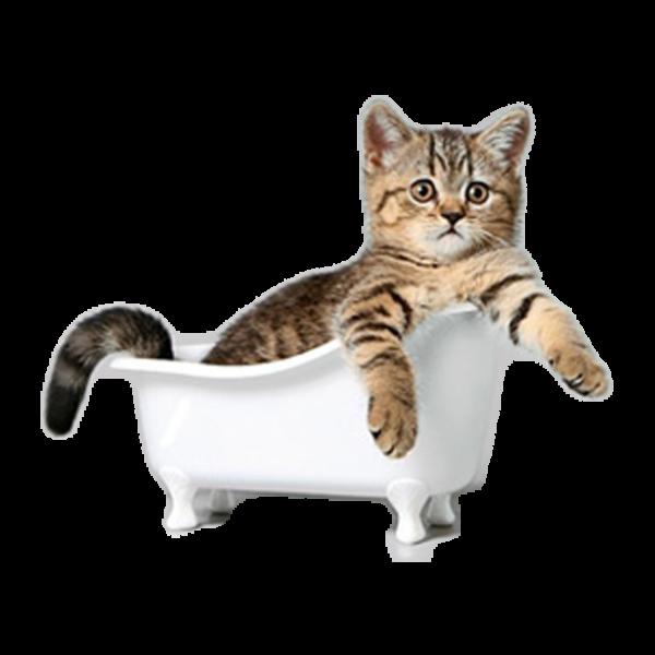 Уход за кошками