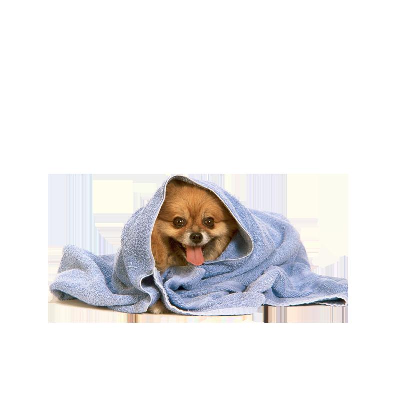 Уход за собаками