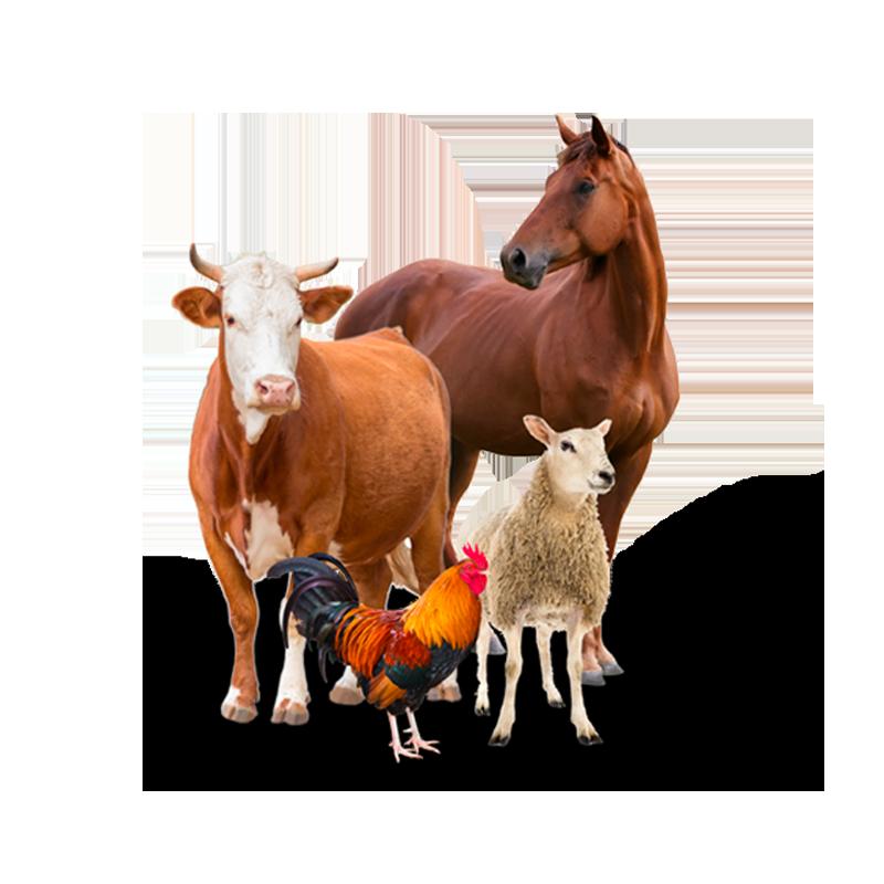 Сельскохозяйственные животные и птицы