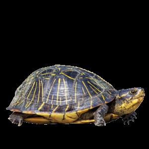 Корма для черепах