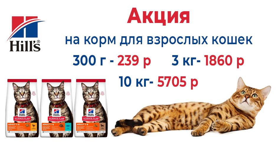 коты авг 21